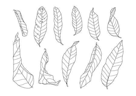 Skeletal leaves dry leaf lined design on white background illustration vector