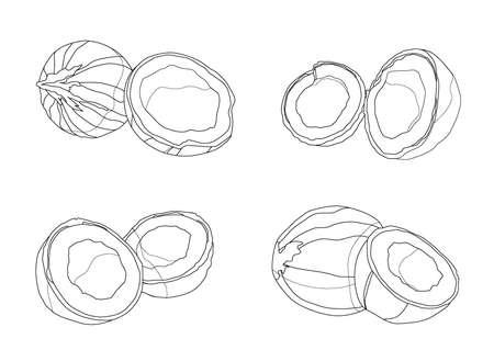 Line coconut fruit fresh on white background illustration vector Illusztráció