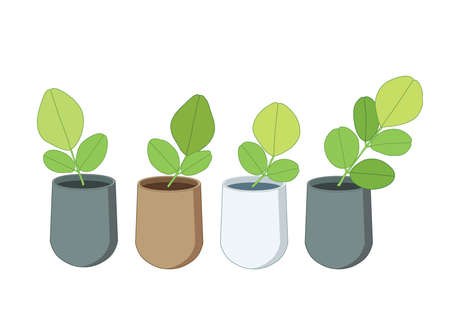 green leaves trees in pots fresh on white background illustration vector 向量圖像
