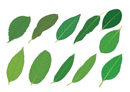 Green Leaves fresh abstract isolated on white background illustration vector