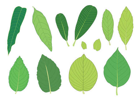green Leaves fresh abstract isolated on white background illustration vector 向量圖像