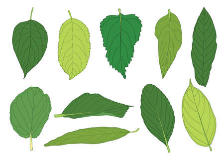 green Leaves fresh abstract isolated on white background illustration vector  イラスト・ベクター素材