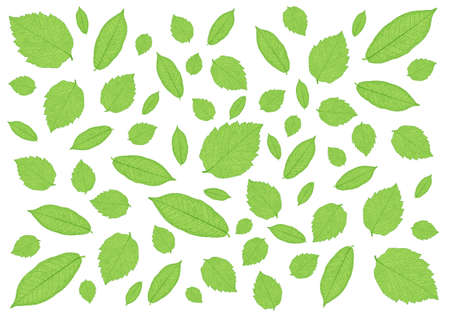 many fresh green leaves and pattern on white background illustration