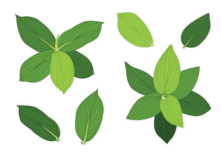 green Leaves fresh abstract isolated on white background illustration vector Vettoriali