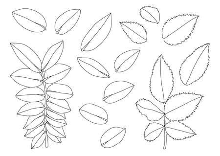 Leaves line single leaf and leaf pattern black Bring to color decorate on white background illustration  vector