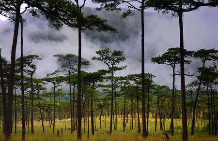 paisaje natural: Paisaje naturales