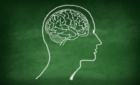 memory board: Brain drawing with chalk on greenboard