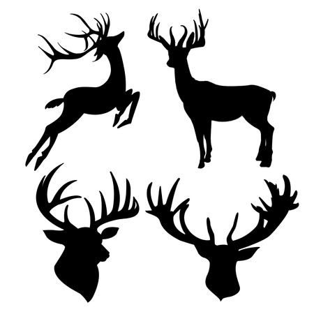 venado: ciervos silueta aislados sobre fondo blanco Foto de archivo