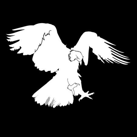 goshawk: eagle silhouette