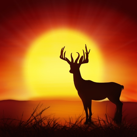 silhouette of deer with big sun ,nature background photo