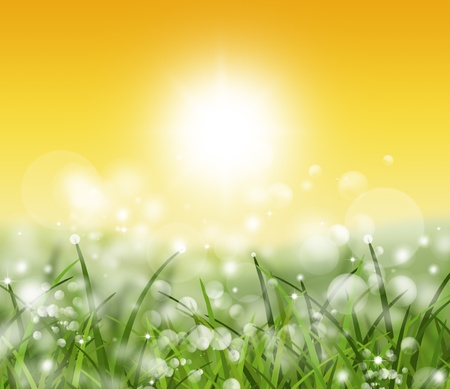 spring and nature background photo