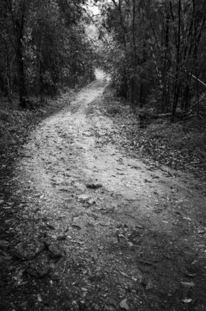 road way in deep forest ,black and white photo