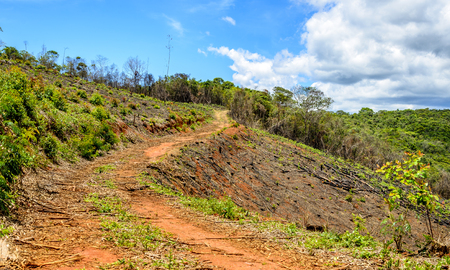 A dirt road in the eucalyptus production forest in  Minas Gerais , Brazil.