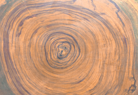 Cross section of the cedar tree . Graphic resources, wooden background.