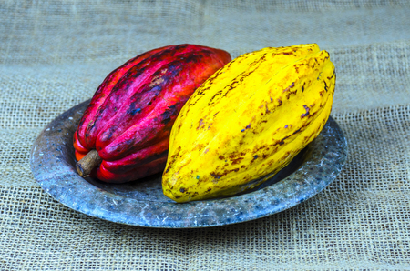 Large ripe  cacao pods on a stone plate and a natural fabric  background.