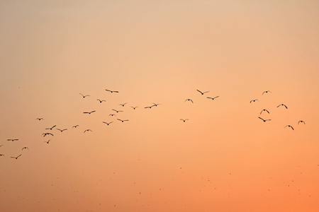 A flock of birds silhouetted against the sunset. On an orange background. Design with copy space.