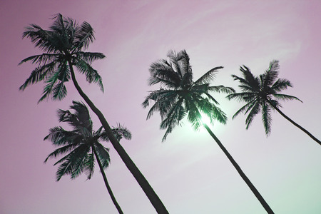 Palm trees silhouettes against pastel sunset on a light green sky. Black silhouettes of palm trees against a background of toned sky. Design with copy space. Surrealistic landscape and design. Standard-Bild