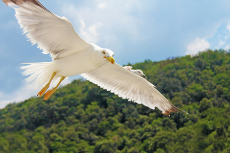 White seagull flies against the blue sky Stock Photo