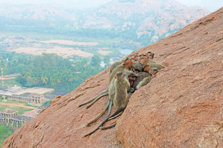 Monkey family sleeps in the mountain in the early morning