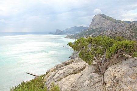 Mountains and the sea. Beautiful landscape. Crimea. Pine.