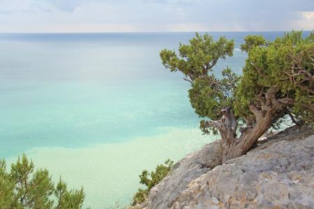 Mountains and the sea. Beautiful landscape. Crimea. Pine.