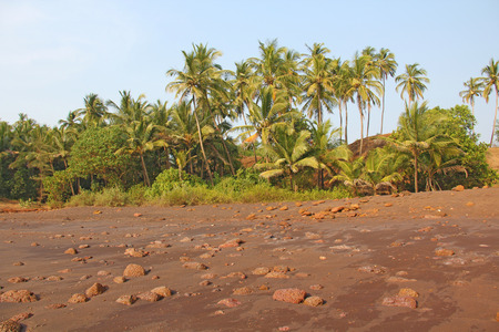 Beach with black sand and palm trees. Dark brown volcanic sand and beach in India, GOA. Large round stones on the beach.