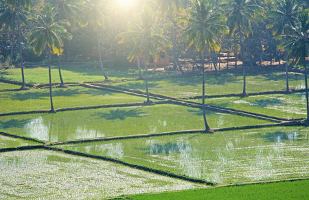 Green rice fields or terraces in the village of Hampi. Palm trees, sun, rice fields, large stones. Tropical exotic landscape. Beautiful green valley. View from above. Foto de archivo