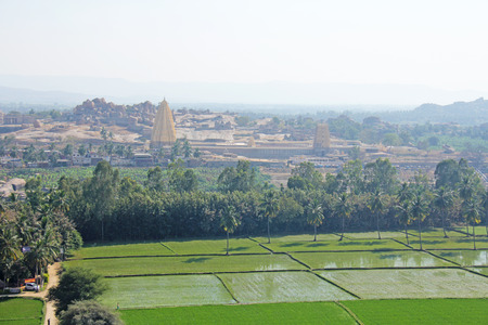 Green rice fields or terraces in the village of Hampi and the Temple of Virupaksha. Palm trees, sun, rice fields, large stones. Tropical exotic landscape. Beautiful green valley. View from above.