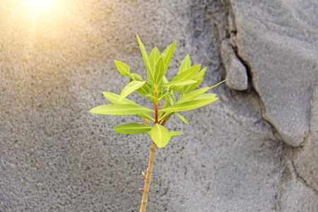 Green Sprout on the Background of Gray Stone. Gorge of Alcantara. The island of Sicily, Italy. Place for Text.
