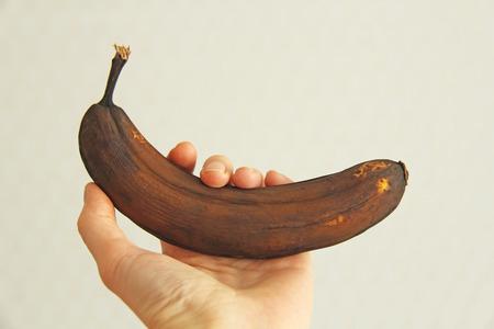 Zwarte bedorven banaan ter beschikking. Een hand houdt een rot zwart of bruin bananenfruit vast. Een rotte banaan. Enkele verwende zwarte banaan. Kopieer ruimte voor uw tekst. Trendy verwend biologisch fruit - Afbeelding. Stockfoto
