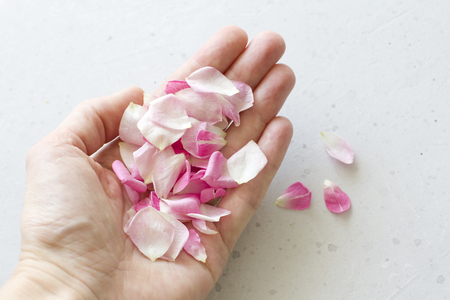 Rose petals lie on the hand, on a light gray concrete background. Tenderness, wedding, postcard and cover for decoration. Flat Lay, Top View, Copy Space For Your Text.