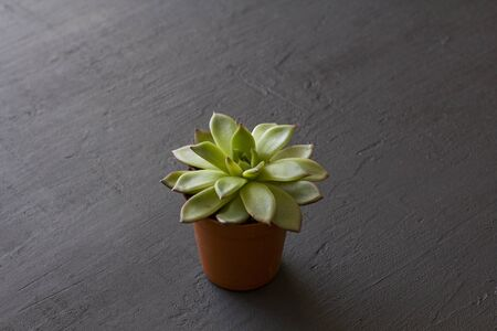 One small terracotta pot with succulent stands on a black or dark modern concrete background. Copy space for your text. Top and side view. Reklamní fotografie