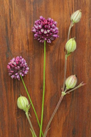 Wild onion violet on a wooden background of black walnut. Beautiful summer wildflowers. Minimalism, loft style. vertical, vertical design. Foto de archivo