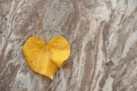 A yellow leaf of a tree in the shape of a heart lies on the marble. Autumn romantic design.