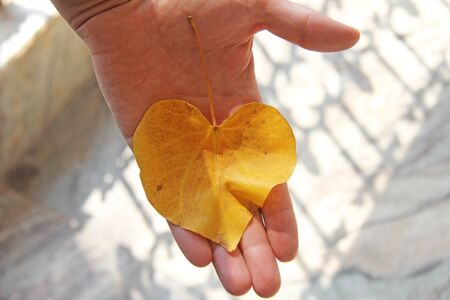 A yellow leaf of a tree in the shape of a heart lies on the palm of a man. Autumn romantic design.