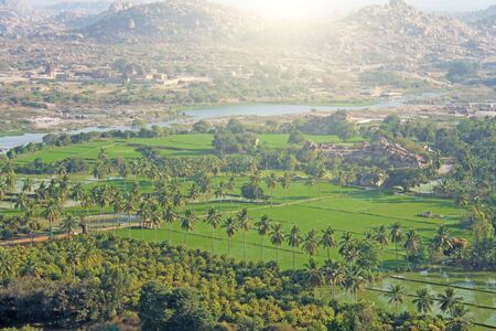 Green rice fields, palms and river Tungabhadra in the village of Hampi. Palm trees, the sun, rice fields. Tropical exotic landscape. Beautiful green valley. View from above.