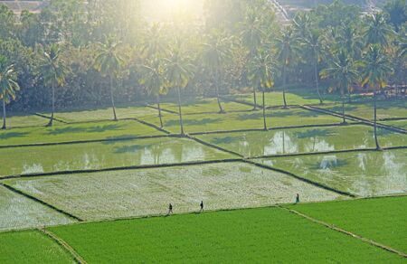 Green rice fields or terraces in the village of Hampi. Palm trees, sun, rice fields, large stones. Tropical exotic landscape. Beautiful green valley. View from above. People go in the rice fields.