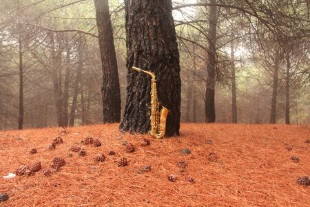 Golden Alto Saxophone in the Forest at the Foot of Mount Etna. The island of Sicily, Italy. Place for Text. Card. Romantic Saxophone.
