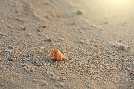 Beautiful Little shell lies on the sea sand.