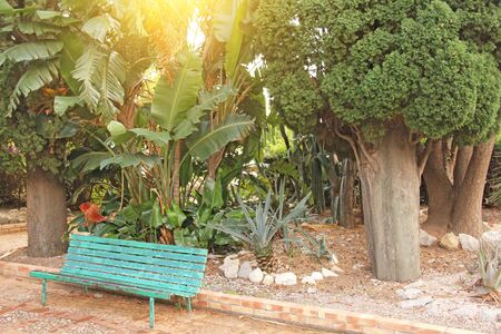 Scenic Benches and Green Trees in the Botanical Garden of Taormina City. The island of Sicily, Italy. Large spines of cacti.
