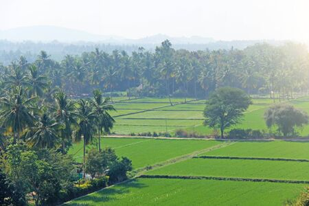 Green rice fields or terraces in the village of Hampi. Palm trees, sun, rice fields, large stones. Tropical exotic landscape. Beautiful green valley. View from above. 写真素材