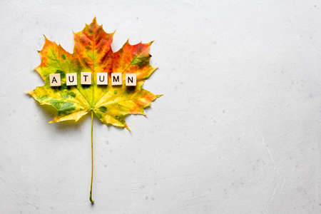 Bright yellow green orange red maple leaf lies on white light modern concrete background, word autumn is written from wooden letters, modern style, autumn card, concept, october. Copy space for text.