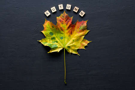 Bright yellow green orange red maple leaf lies on black dark modern concrete background, word autumn is written from wooden letters, modern style, autumn card, concept, october. Copy space for text. Zdjęcie Seryjne