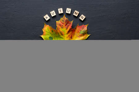 Bright yellow green orange red maple leaf lies on black dark modern concrete background, word autumn is written from wooden letters, modern style, autumn card, concept, october. Copy space for text. 免版税图像