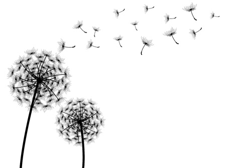 dandelion wind: vector dandelion with white background Illustration