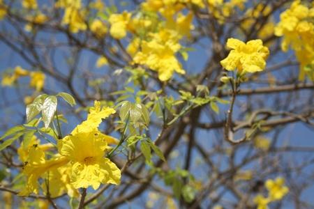 servitude: yellow flowers in sunlight
