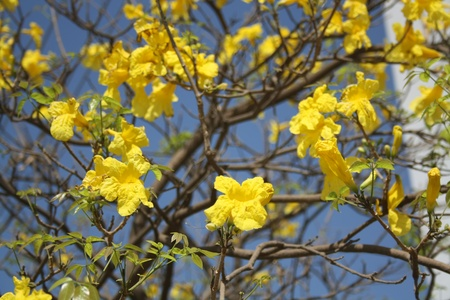conjoin: many yellow flowers  Stock Photo
