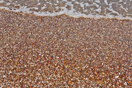 scamper: reaching sea waves