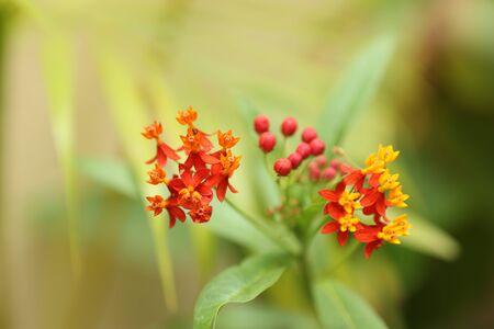 flowering herbs Stok Fotoğraf