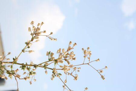 fountainhead: tiny plant Stock Photo